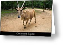 Common Eland Greeting Card by Chris Flees