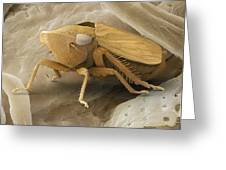 Common Froghopper, Sem Greeting Card by Power And Syred