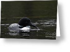 Common Loon 1 Greeting Card by Larry Ricker