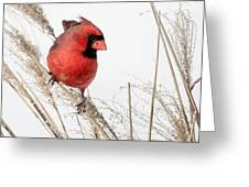 Common Northern Cardinal Square Greeting Card by Bill Wakeley