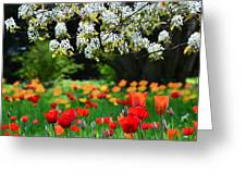 Composition Greeting Card by Gynt