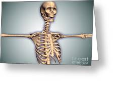 Conceptual Image Of Human Rib Cage Greeting Card by Stocktrek Images