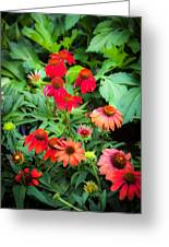 Coneflowers Echinacea Rudbeckia Greeting Card by Rich Franco