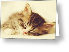 Content Kitty Greeting Card by Pam  Holdsworth