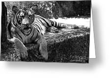 Cool Waters - Tiger Greeting Card by Maria Martinez