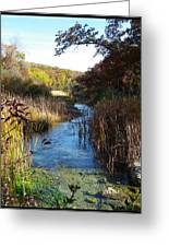 Cool Wisconsin Stream... Greeting Card by Tim Fillingim
