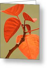 Copper Plant Greeting Card by Ben and Raisa Gertsberg