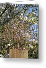 Copper Willow Greeting Card by Kim Bleeker