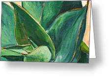 Coral Aloe 3 Greeting Card by Athena Mantle