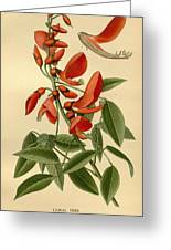 Coral Tree Greeting Card by Philip Ralley