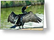 Cormorant Drying Wings Greeting Card by  Bob and Nadine Johnston