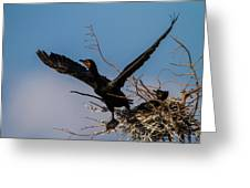 Cormorant Parent Flying Out Greeting Card by Andres Leon