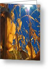 Corn Greeting Card by Todd and candice Dailey