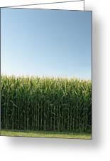 Corn Field And Sky, Abbotsford, British Greeting Card by Bert Klassen
