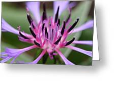 Cornflower Bloom Greeting Card by Mark Severn