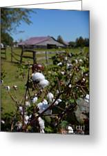 Cotton Farm Greeting Card by Jeanne  Woods