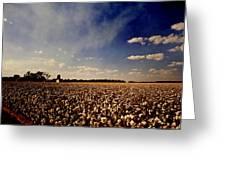Cotton Field Greeting Card by Scott Pellegrin