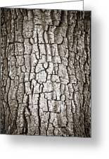 Cottonwood Bark 1 Greeting Card by Marilyn Hunt