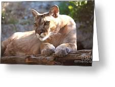 Cougar 1 Greeting Card by DiDi Higginbotham