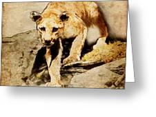 Cougar Hunting Greeting Card by Ray Downing