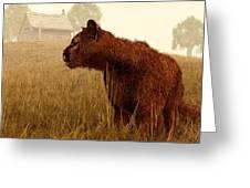 Cougar In A Field Greeting Card by Daniel Eskridge