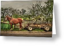 Country Life Greeting Card by Evelina Kremsdorf
