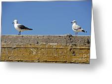 Couple Of Seagulls On A Wall Greeting Card by Sami Sarkis