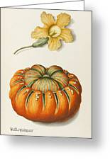 Courgette And A Pumpkin Greeting Card by Joseph Jacob Plenck