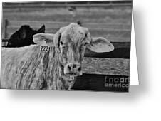 Cow 222 Greeting Card by Lynda Dawson-Youngclaus