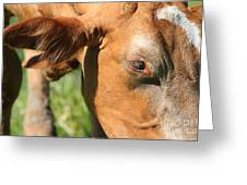 Cow Closeup 7d22391 Greeting Card by Wingsdomain Art and Photography