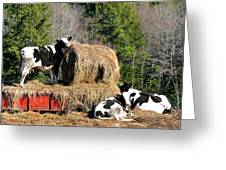 Cow Country Buffet Greeting Card by Christina Rollo