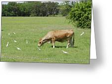 Cow Grazing With Egret Greeting Card by Charles Beeler