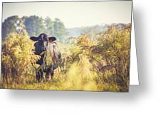 Cow Hiding In The Weeds Greeting Card by Karen Broemmelsick