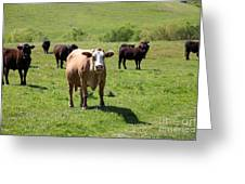 Cows Along The Rolling Hills Landscape Of The Black Diamond Mines In Antioch California 5d22341 Greeting Card by Wingsdomain Art and Photography