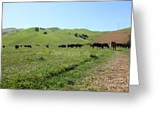 Cows Along The Rolling Hills Landscape of The Black Diamond Mines in Antioch California 5D22346 Greeting Card by Wingsdomain Art and Photography