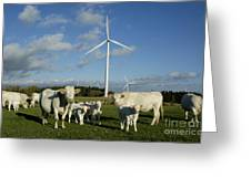 Cows And Windturbines Greeting Card by Bernard Jaubert