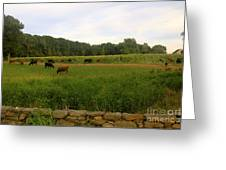 Cows At Buttonwood Greeting Card by Dorothy Drobney