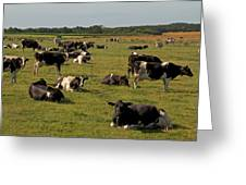 Cows At Work 1 Greeting Card by Odd Jeppesen