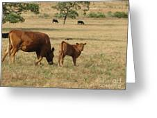 Cows In The Pasture Greeting Card by Maureen J Haldeman
