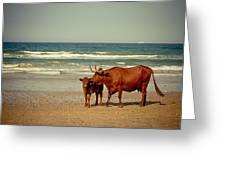 Cows On Sea Coast Greeting Card by Raimond Klavins