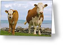 Cows Greeting Card by Terry Whittaker