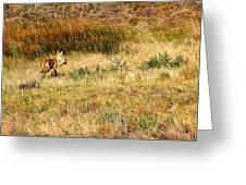 Coyote Catch Greeting Card by Rebecca Adams