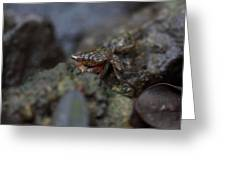 Crab In Mangrove Forest In Los Haitises National Park Dominican Republic Greeting Card by Andrei Filippov