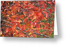 Crabapple Greeting Card by Kimberly Maxwell Grantier