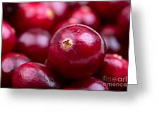 Cranberry closeup Greeting Card by Jane Rix