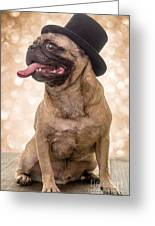 Crazy Top Dog Greeting Card by Edward Fielding