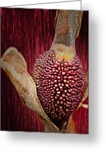 Crimson Canna Lily Bud Greeting Card by Bill Tiepelman