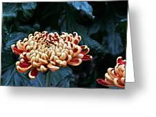 Crimson Tide Irregular Incurve Mum Greeting Card by Byron Varvarigos