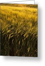 Crops Greeting Card by Svetlana Sewell