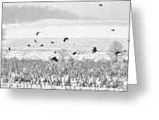 Crows In Cornfield Winter Greeting Card by Dan Friend